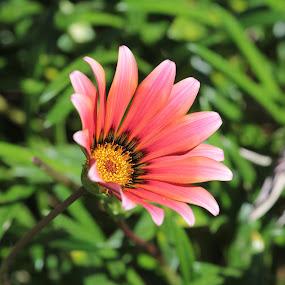 by Ruben Guerrero - Flowers Single Flower