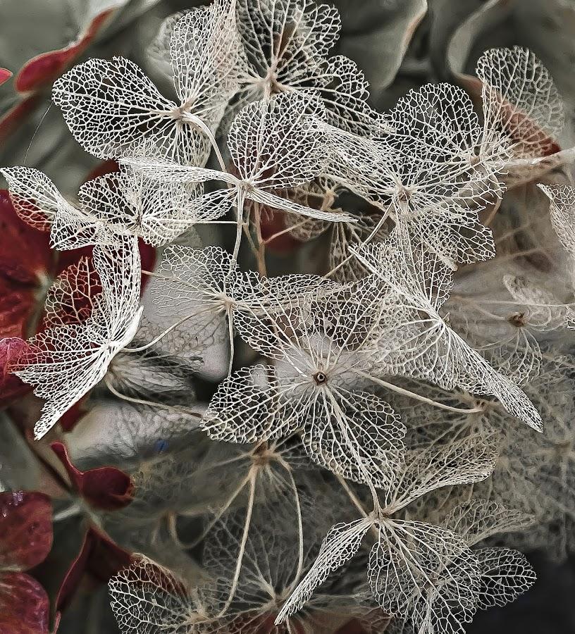 Dry petals of hydrangea by Manuela Dedić - Artistic Objects Still Life (  )