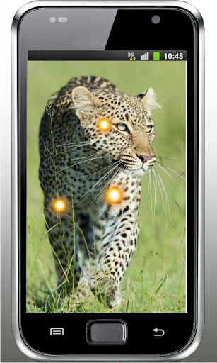 Leopard Wild HD live wallpaper