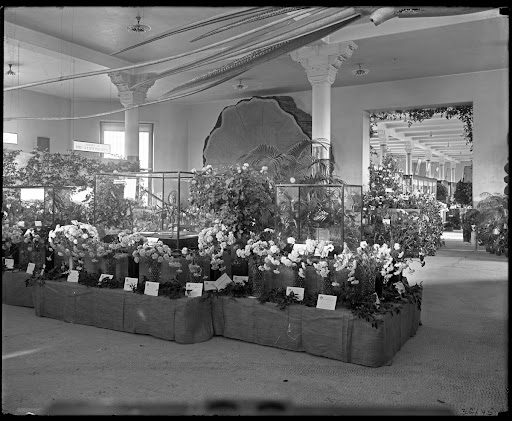 Flower show, Fall Exhibition of the Horticultural Society of New York, November 17-20, 1908