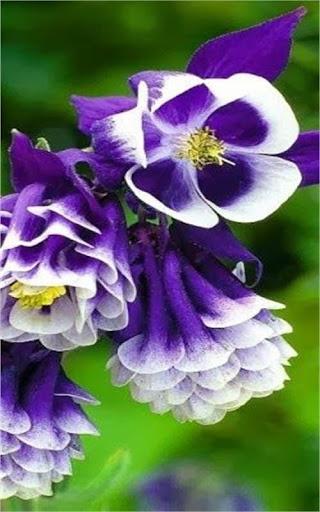 ดอกไม้สดวอลล์เปเปอร์