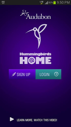 Audubon Hummingbirds At Home