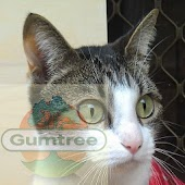 Brisbane Gumtree cat sorter