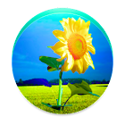 Sunflower PRO - Weather map icon
