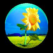 Sunflower PRO