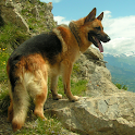 Top 50 Dog Breeds icon