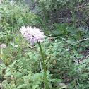 flor-dos-macaquinhos