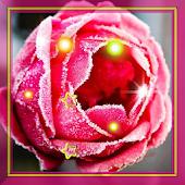Red Rose Love live Wallpaper