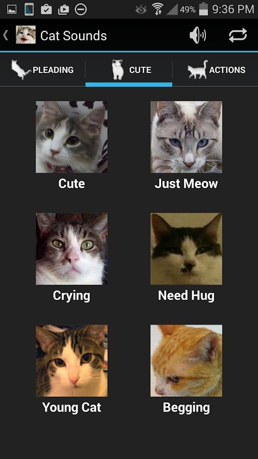 Cat Sounds - screenshot