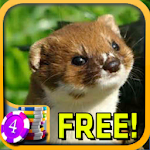 Weasel Slots - Free