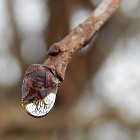 by Marijan Alaniz - Nature Up Close Natural Waterdrops (  )