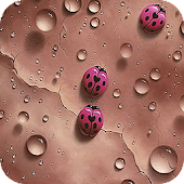LadyBird Live Wallpaer