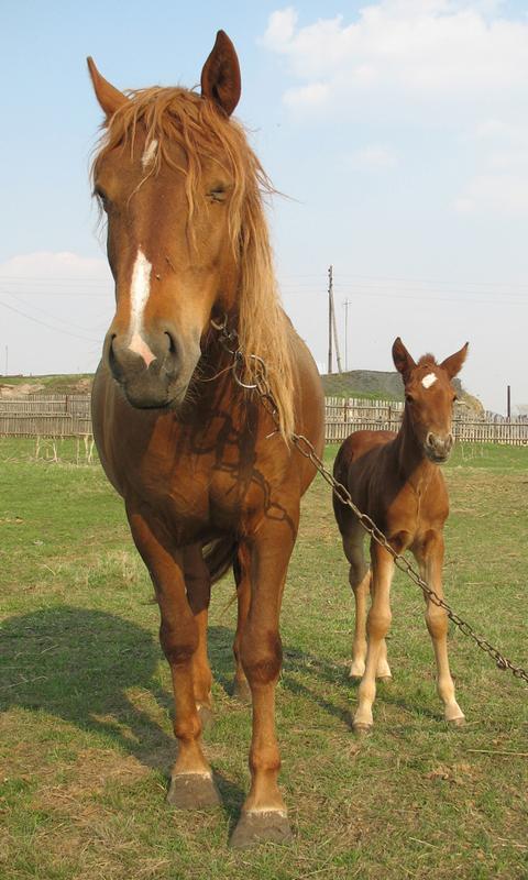 الخيول : الألغاز للأطفال والأس- screenshot