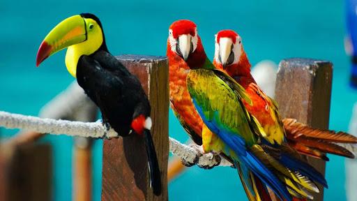【免費工具App】Colorful Bird Wallpaper-APP點子