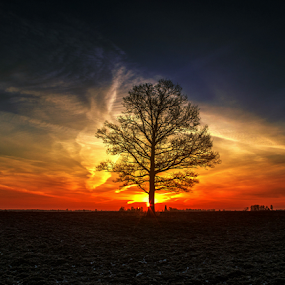 Beautiful loneliness by Laimonas Šepetys - Landscapes Sunsets & Sunrises (  )