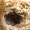Sunbird's  Nest