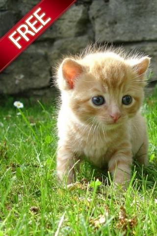 cutest animal photos
