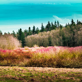 A Spring Day by Gerard Toney - Landscapes Forests ( colour, blue sky, wood, calming, mixture, trees, pink, forest, relaxing, spring, colours )