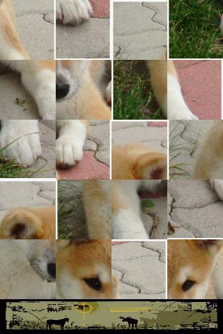 Dog Puzzle: Akita - screenshot