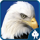 Birds Jigsaw Puzzles Game icon