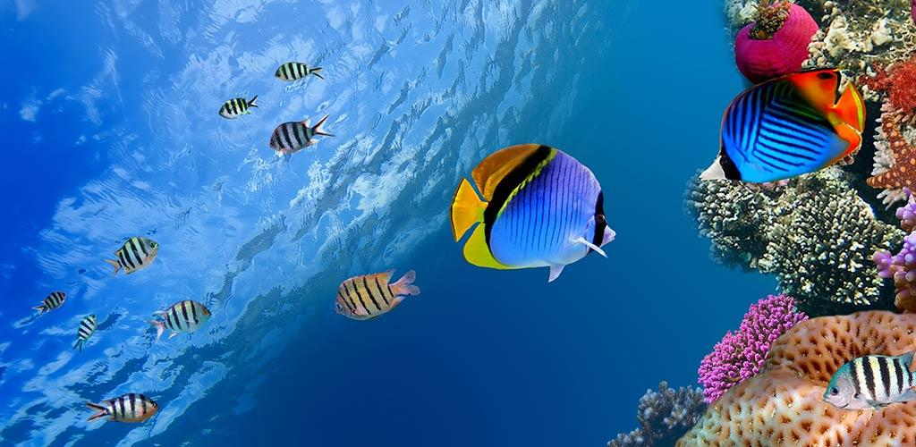 Ocean Fish Live Wallpaper 3.1 Apk Download