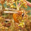 Noctunal Hornet