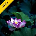 Meditative Harmony Pack (PRO) icon