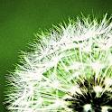 Pollen-Vorhersage icon