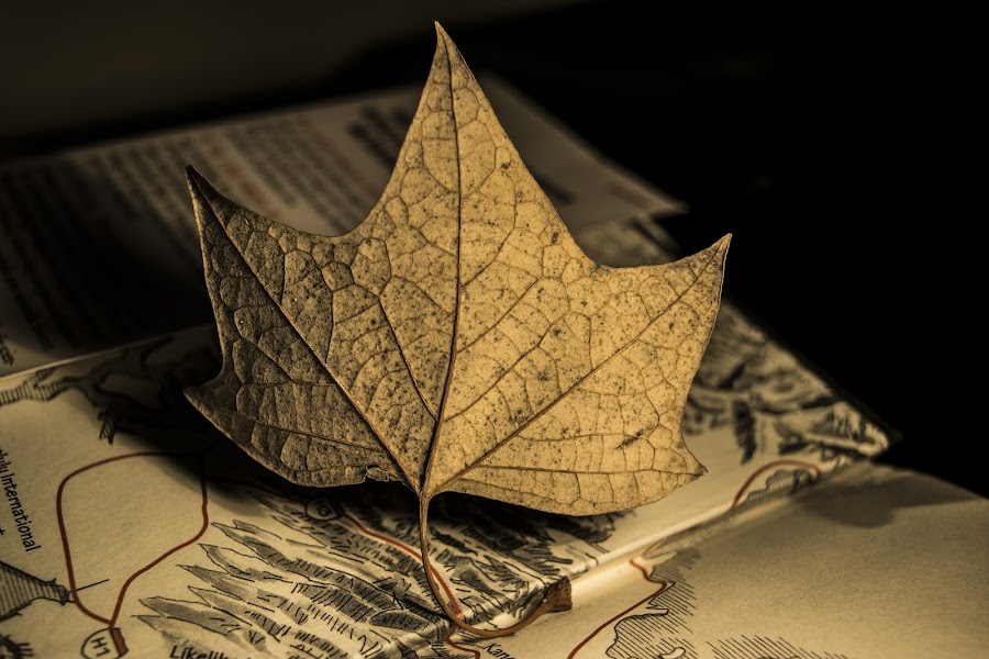 Seca by Sergio Yorick - Artistic Objects Still Life ( still life, artistic, object, artistic objects, leaf,  )