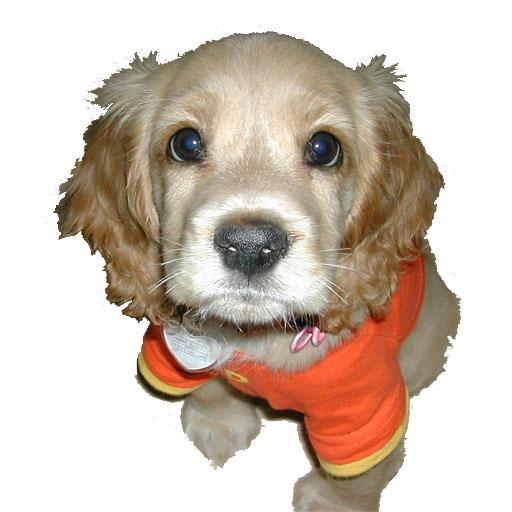 可愛的小狗拼圖 休閒 App LOGO-APP試玩