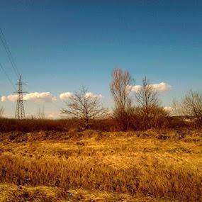 Spring Field by Nat Bolfan-Stosic - Uncategorized All Uncategorized ( field, blue sky, bright, white clouds, spring )