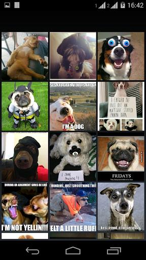 meme FUNNY DOG