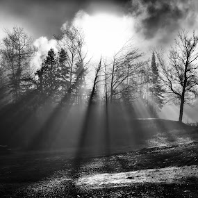 Sun Through Trees by Melissa Connors - Black & White Landscapes ( clouds, fog, black & white, beams, trees, sunrise, sun, mist )