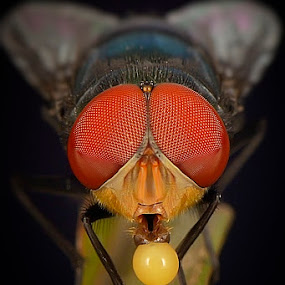 main balon by Rhonny Dayusasono - Animals Insects & Spiders