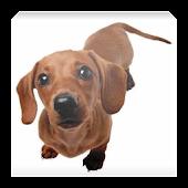 Такса - уход за собакой