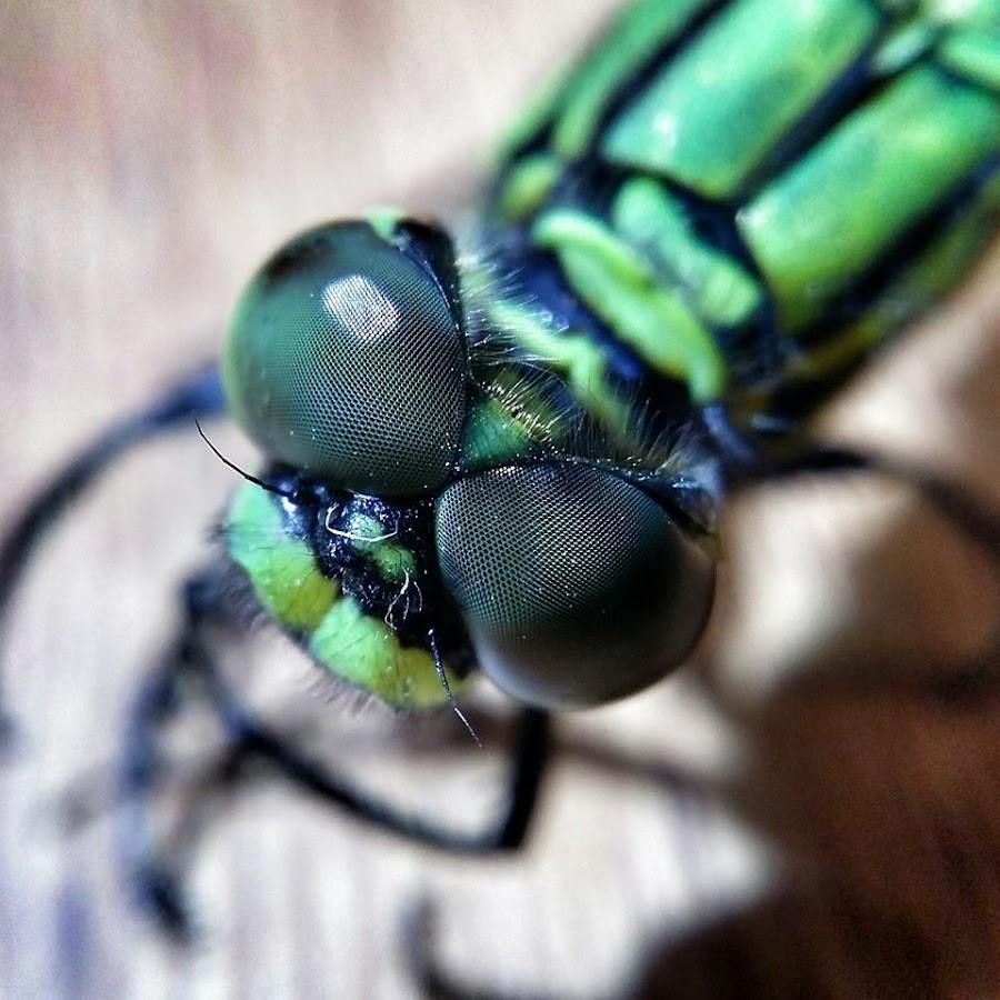 Dragonfly by Budi Kurniawan Setiawan - Instagram & Mobile Android