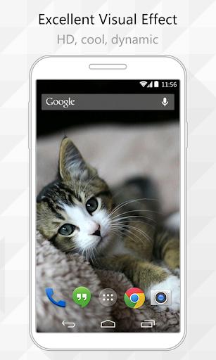 Cats Live Wallpaper