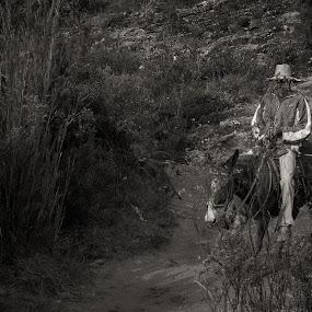 Muleiro by Mauro César Louzada - Animals Horses