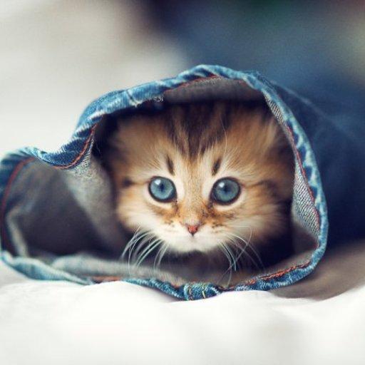 有趣的小猫壁纸 個人化 App LOGO-APP試玩
