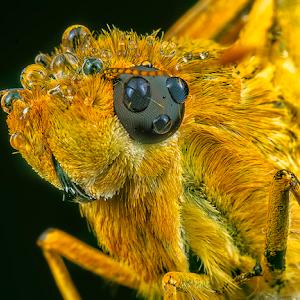 bushhopper.jpg