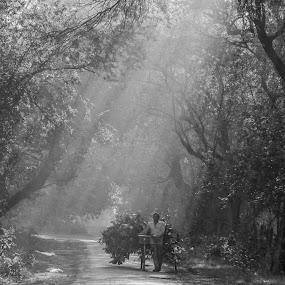 Light Shower by Gaurav Madhopuri - Novices Only Street & Candid ( gaurav madhopuri, nature, black and white, trees, rural,  )