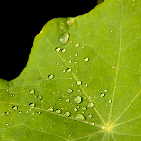 Water Drops on leaf by HeartMonster Ankush - Nature Up Close Leaves & Grasses ( camera, greener, leaf, light, droplets )