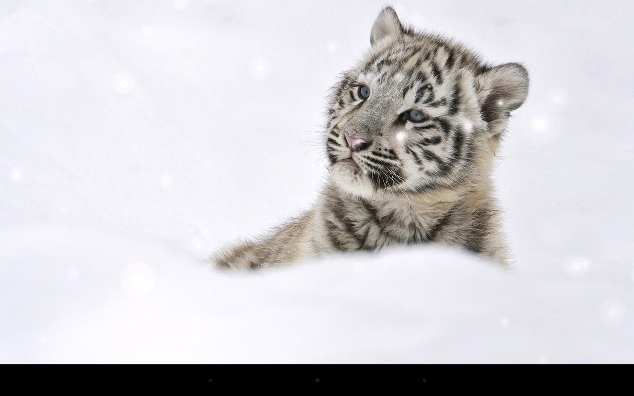 Dream Big Cat Tiger
