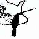Oriental darter (silhouettes)