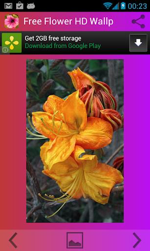 花卉高清壁紙免費下載
