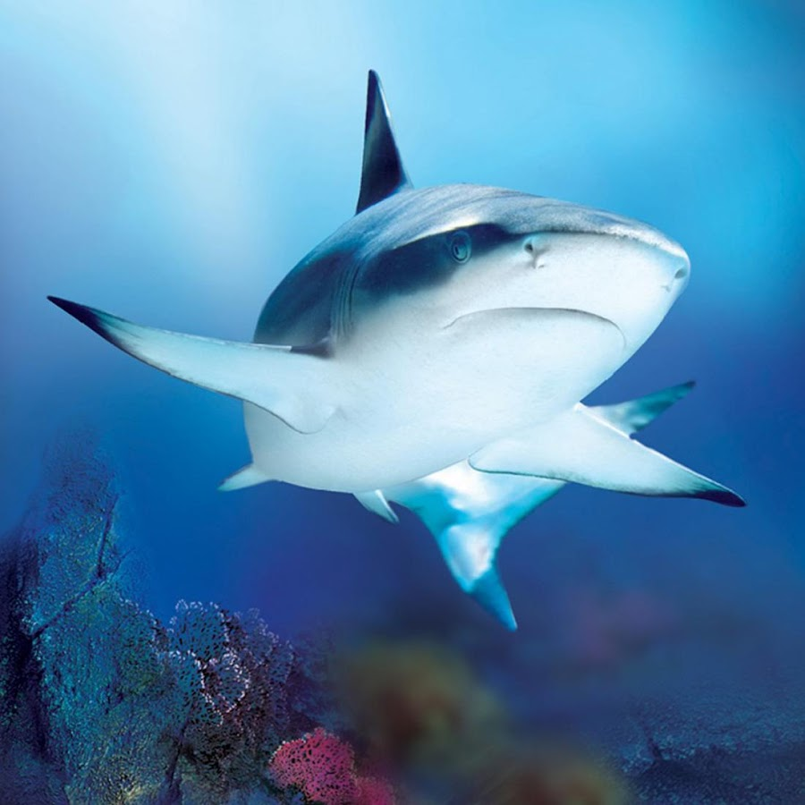 download wallpaper shark 1600 - photo #46