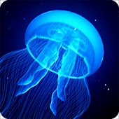 Night Light Jelly Fish LWP