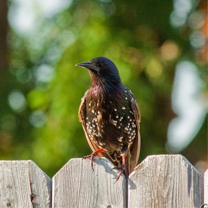 Starling? Unsure