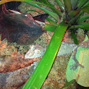 Mossy leaf tailed gecko.