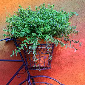 Bike Flower Basket by Darlene Lankford Honeycutt - Artistic Objects Other Objects ( plant, decorative, deez, bike basket, dl honeycutt, artistic object,  )